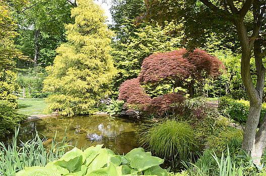 Garden Pond by Judith Morris