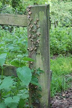 Garden Post #1 by Richard Ballo