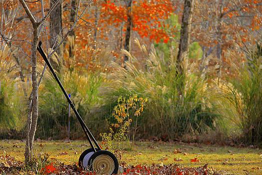 Garden Retiree  by Carolyn Wright