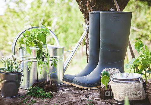 Garden seedlings on wood by Mythja Photography