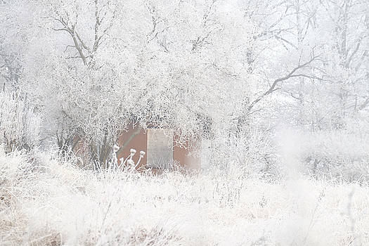 Martin Stankewitz - Garden shack under trees and shrubs in hoar frost