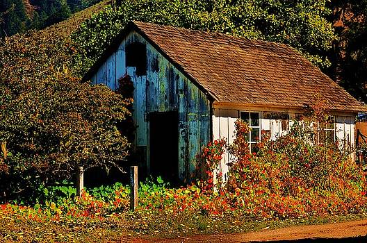 Garden Shed by Helen Carson