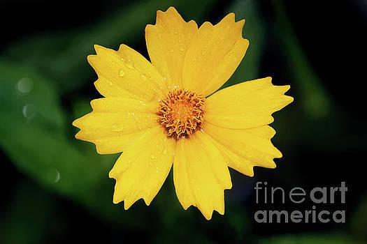 Garden Sun by Karen Adams