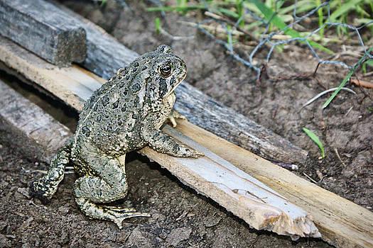 Nikolyn McDonald - Garden Toad