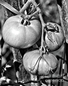 Garden Tomatoes In Black And White by Smilin Eyes  Treasures