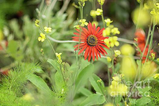 Garden Variety by Reynaldo Brigantty