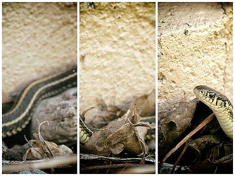 Kyle West - Gardener Snake