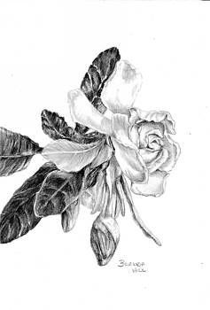 Gardenia by Brenda Hill