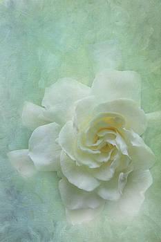 Gardenia by Catherine Alfidi