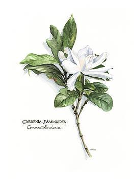 Gardenia Jasminoides by Rowena Finn