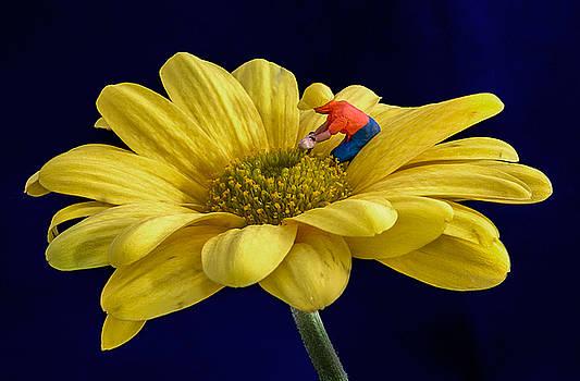 Gardening by Sandi Kroll