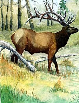 Gash Flats Bull by Jimmy Smith