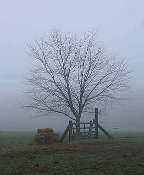 Gate Bales and Tree in Foggy Morn by Matt Cormons