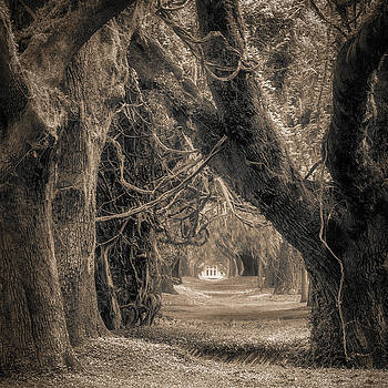 Gateway Through an Avenue of Live Oaks by Chris Bordeleau