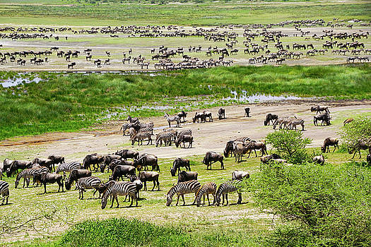 Dennis Cox WorldViews - Gathering for Great Migration