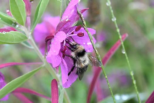 Gathering Nectar by Sherry McKellar