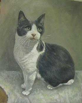 Gato by Elizabeth Ellis