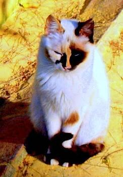 Gato Espana by Ted Hebbler