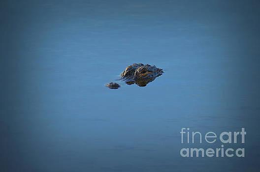 Alligator - 0142a by Debra Kewley