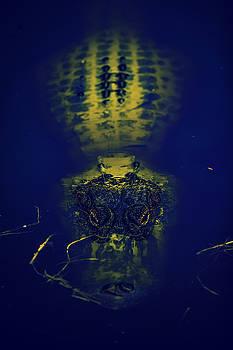 Gator Bulb by Michael Touchet