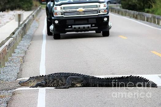 Paulette Thomas - Gator Stopping Traffic