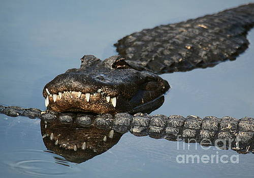 Gator Tail by Myrna Bradshaw