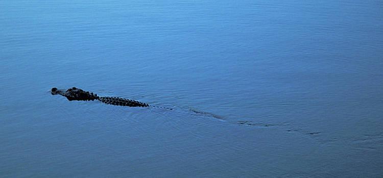 Kathi Shotwell - Gator Trail