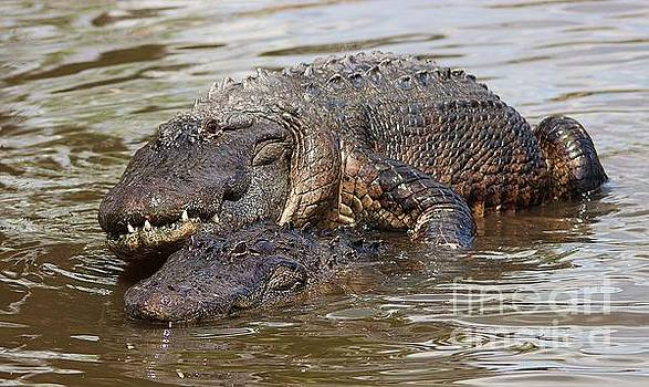 Paulette Thomas - Gators Mating
