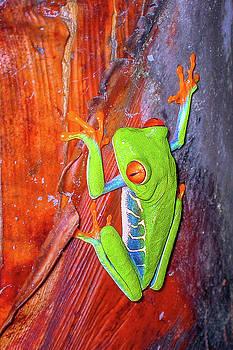 Andrew Wilson - Gaudy Leaf  Frog