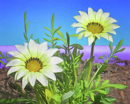 Nikolyn McDonald - Gazania - Painted