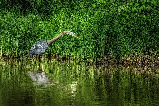 Gbh by Lisa Plymell