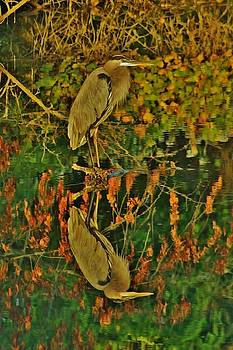Great Blue HeronReflection by Thomas McGuire