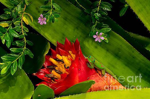 Gecko Aloha all proceeds go to Hospice of the Calumet Area by Joanne Markiewicz