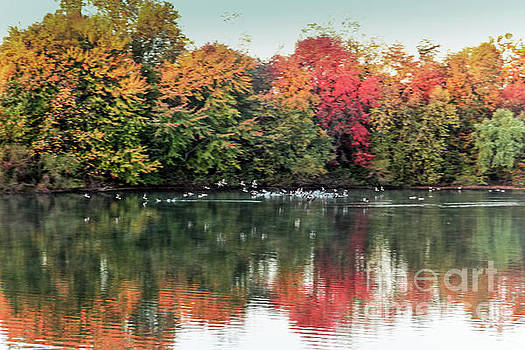 Geese and Autumn Leaves by Thomas Marchessault