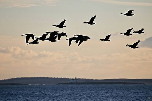Geese and Cuckholds by John Meader