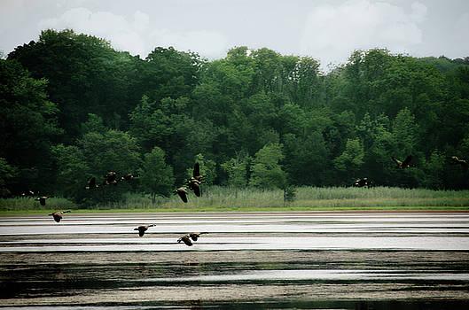 Geese in Flight by Eleanor Bortnick