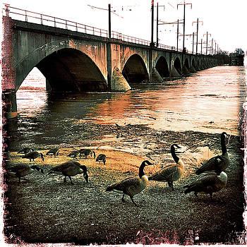 Geese On A Stroll by Kevyn Bashore
