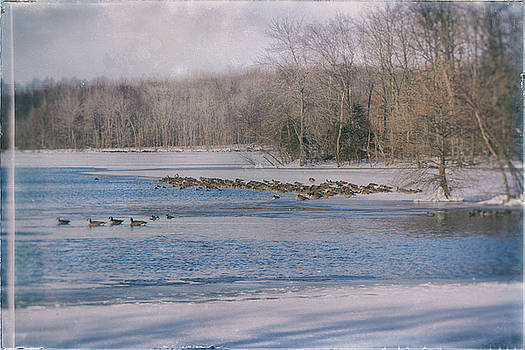 Geese on Frozen Lake by Deb Henman