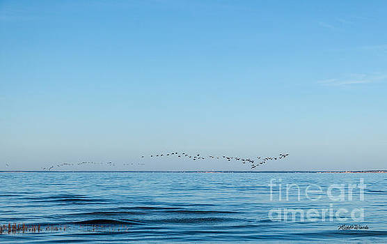 Michelle Constantine - Geese Over the Cape Cod Bay