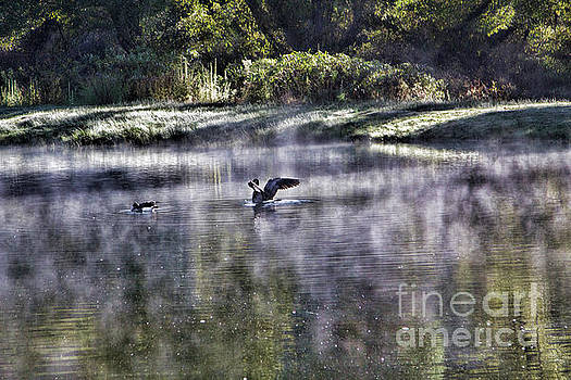 Chuck Kuhn - Geese Pond Nature Wings
