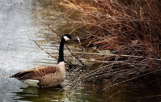 Geese by Scott Fracasso