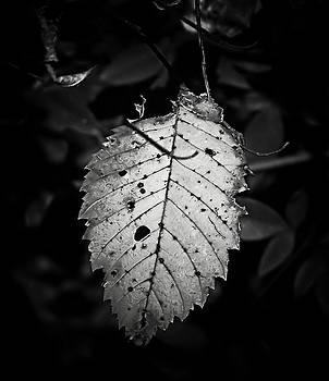Karen Scovill - Gelatin Leaf