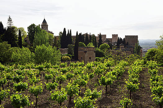 Reimar Gaertner - Generalife Vineyard overlooking Saint Mary belfry and Nesrid Pal