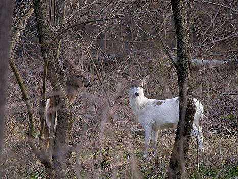 Genetic Mutant Deer by Paul Ross