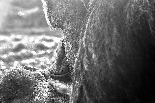 Gentle Giant by Spade Photo