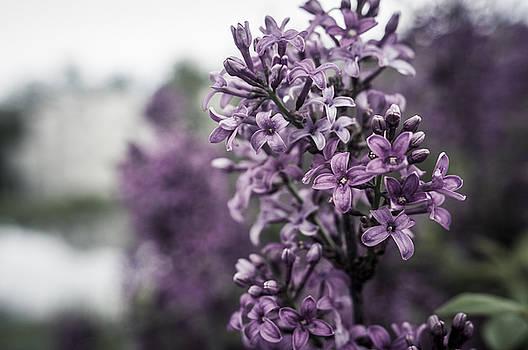 Miguel Winterpacht - Gentle Spring Breeze