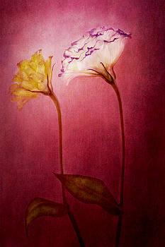 Gentle Touch  by Marina Kojukhova