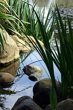 Balanced Art - Gentle Water