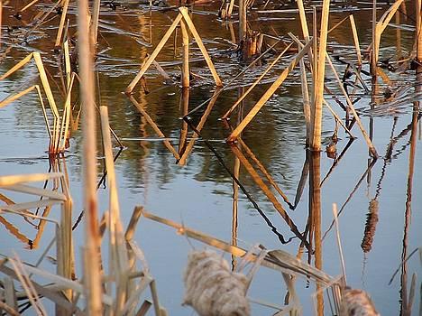 Geometry in the Pond by Loretta Pokorny