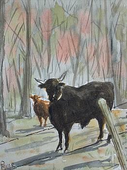 Georgia Bull by Pete Maier